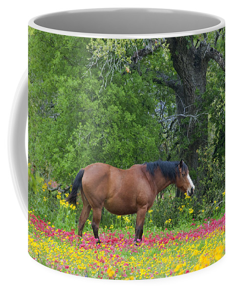 Landscape; North America; Texas; Wildflowers; Farm Animal; Horse; Drummonds Phlox; Crown Tickweed; Red; Oak Tree; Dave Welling; Spring; New Growth; Peaceful Coffee Mug featuring the photograph Domestic Horse In Field Of Wildflowers by Dave Welling