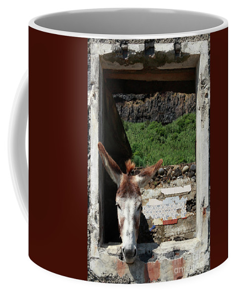 Unusual Coffee Mug featuring the photograph Donkey At The Window by Gaspar Avila