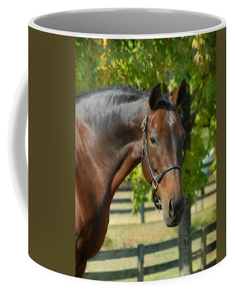 Warmblood Horses Coffee Mug featuring the photograph Donna Gina by Fran J Scott