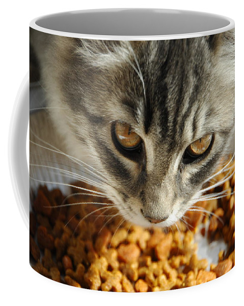 Cat Coffee Mug featuring the photograph Don't Even Think About It by Donna Blackhall
