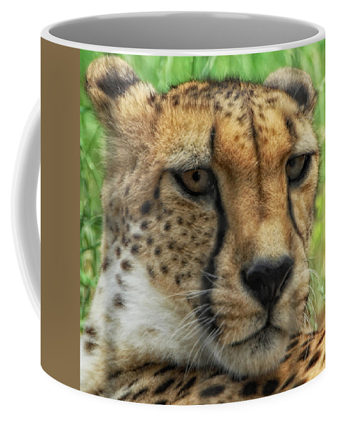 Cheetah Coffee Mug featuring the photograph Don't Mess With Me by Donna Blackhall