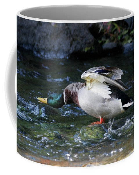Mallard Drake Coffee Mug featuring the photograph Don't Mess With Me by Randall Ingalls