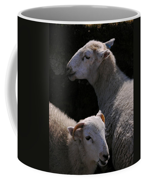 Sheep Coffee Mug featuring the photograph Double Portrait by Harry Robertson