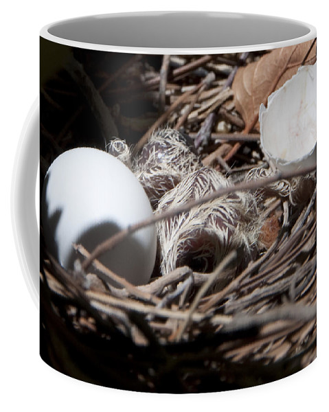 Nest Coffee Mug featuring the photograph Dove Hatchling by Steven Natanson