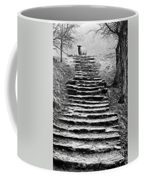 Animal Coffee Mug featuring the photograph Dovedale Steps by John Edwards