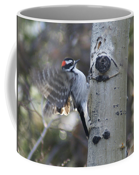 Woodpecker Coffee Mug featuring the photograph Downy Woodpecker by Heather Coen
