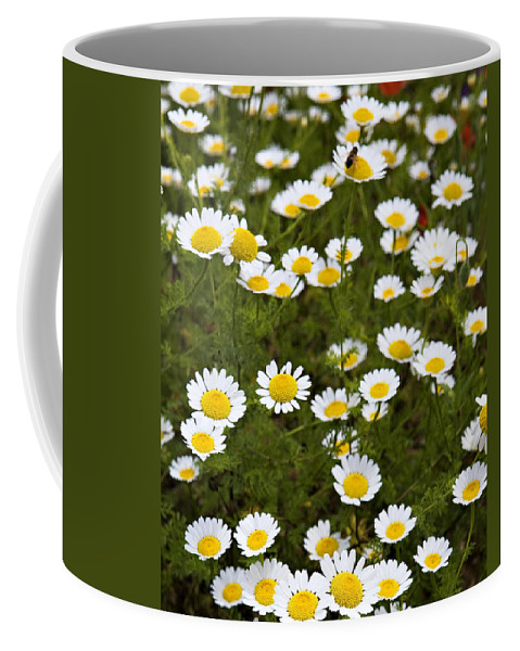 Daisy Coffee Mug featuring the photograph Dozens Of Daisies by Marilyn Hunt