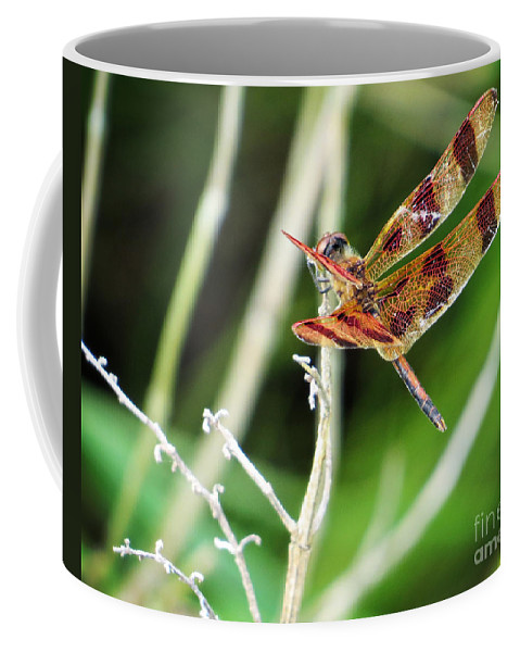 Insect Coffee Mug featuring the photograph Dragon Fly by Dawn Gari