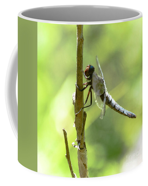 Lake Coffee Mug featuring the photograph Dragonfly Slow Dance by Lisa Kilby
