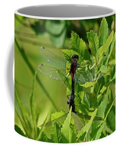 Rons Hebert Coffee Mug featuring the photograph Dragonfly 1 by Ron Hebert