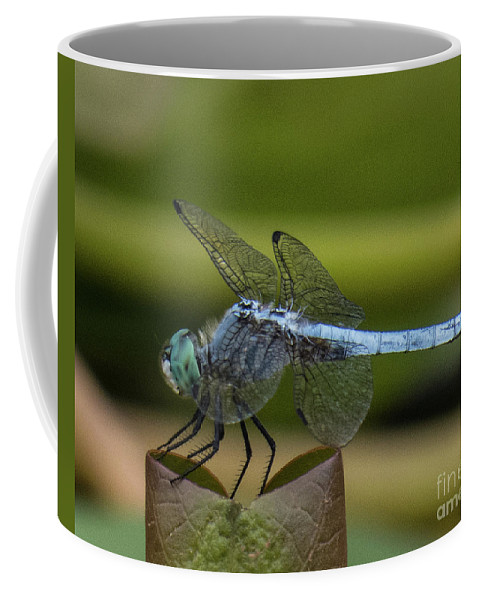 Odonata Coffee Mug featuring the photograph Dragonfly 14 by Christy Garavetto