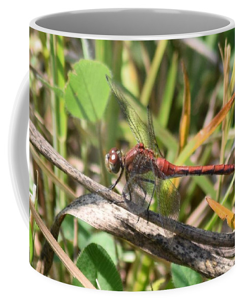 Dragonfly Coffee Mug featuring the photograph Dragonfly by Cheryl Braley