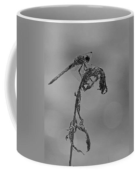 Nature Coffee Mug featuring the photograph Dragonfly In Black And White by Mike Dickie
