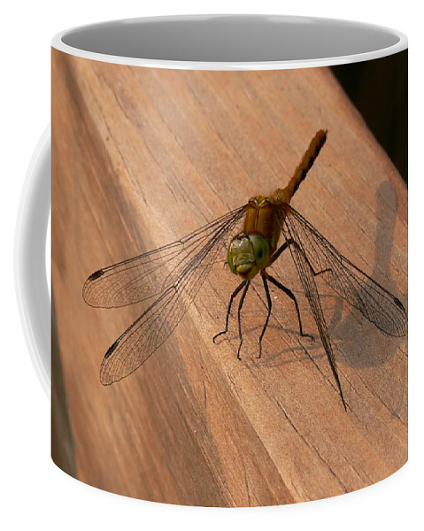 New England Photos Coffee Mug featuring the photograph Dragonfly by Nancie DeMellia