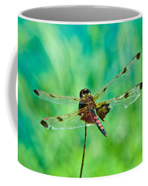 Dragonfly Coffee Mug featuring the photograph Dragonfly Rear Approach by Douglas Barnett