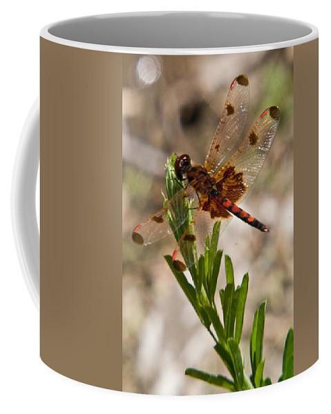 Dragonfly Coffee Mug featuring the photograph Dragonfly Resting 2 by Douglas Barnett