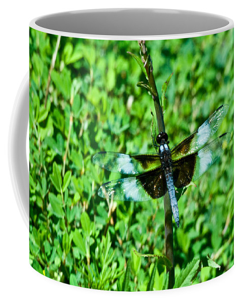 Dragonfly Coffee Mug featuring the photograph Dragonfly Resting On Stem by Douglas Barnett