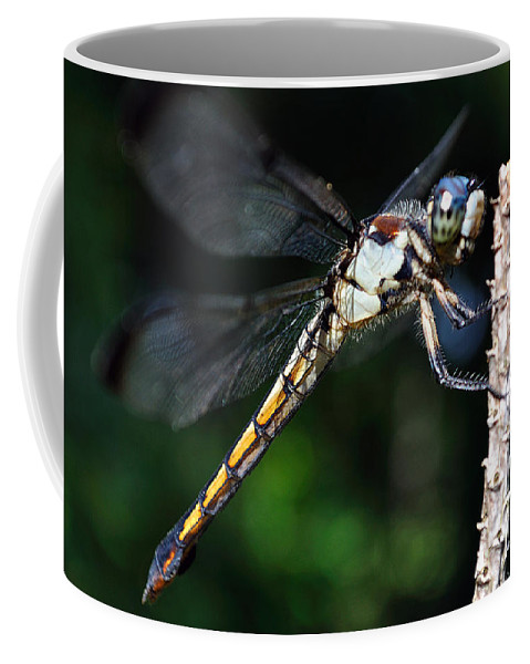 Animal Coffee Mug featuring the photograph Dragonfly Revisited by Kenneth Albin