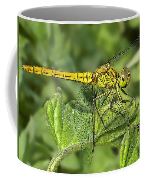 Dragon Coffee Mug featuring the photograph Dragonfly by Svetlana Sewell