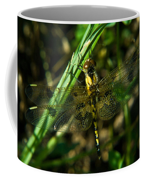 Dragonfly Coffee Mug featuring the photograph Dragonfly Venation Revealed by Douglas Barnett