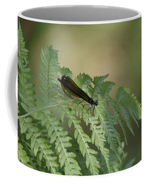Ron Hebert Coffee Mug featuring the photograph Dragonfly4 by Ron Hebert