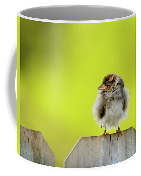 Sparrow Coffee Mug featuring the photograph Dream Sparrow by Betty LaRue