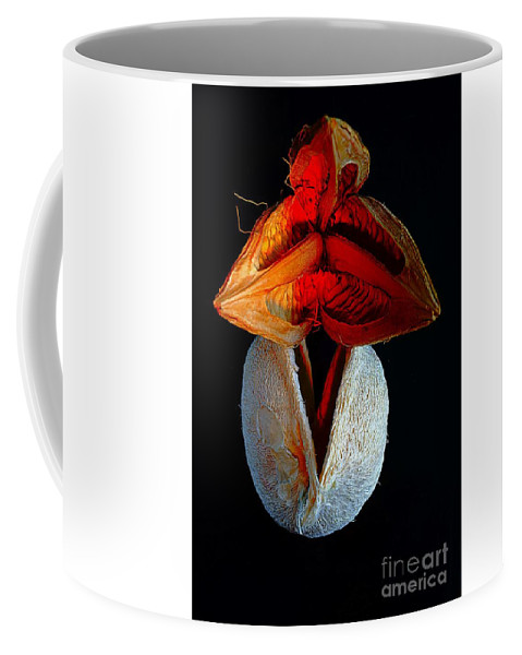 Floral Coffee Mug featuring the photograph Composition With Dried Flowers Red Hat. by Alexander Vinogradov