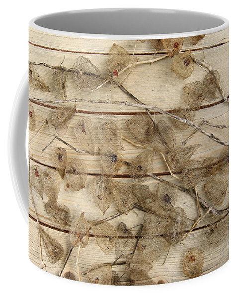 Dried Coffee Mug featuring the photograph Dried Fruits Of The Cape Gooseberry by Michal Boubin