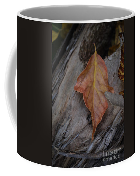 Fall Coffee Mug featuring the photograph Dried Leaf On Log by Heather Kirk