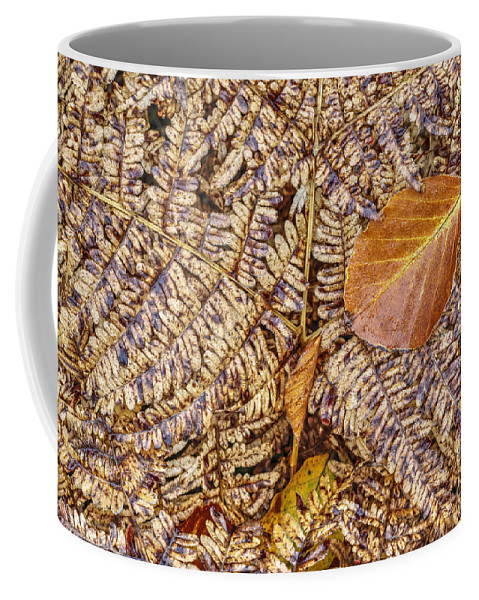 Autumn Coffee Mug featuring the photograph Dried Leaf On The Fern by Michal Boubin