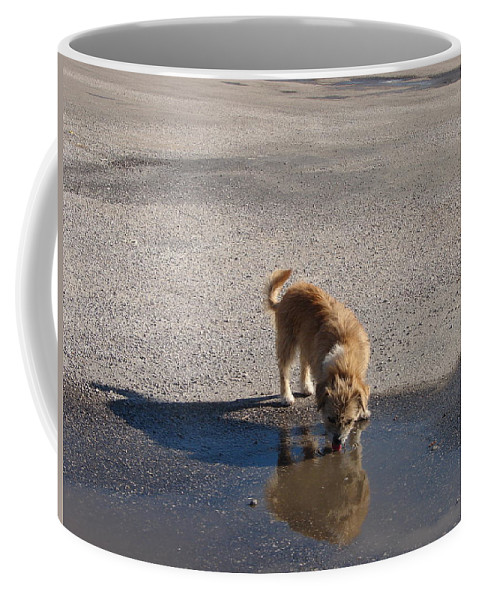 Dog Coffee Mug featuring the photograph Drinking Enough For Reflection And Shadow by J R  Seymour