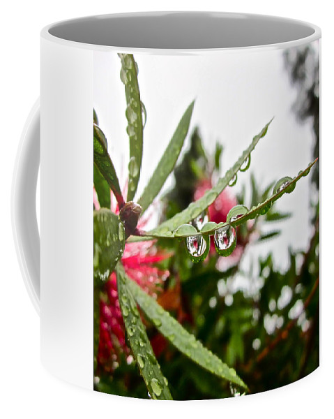 Rain Drop Coffee Mug featuring the photograph Drip And Drop by Gwyn Newcombe
