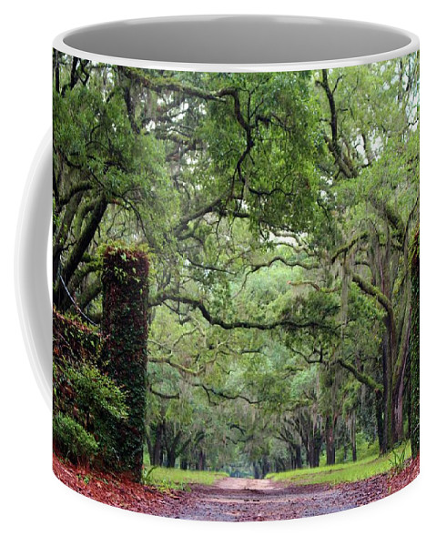 Driveway Coffee Mug featuring the photograph Driveway To The Past by Cynthia Guinn