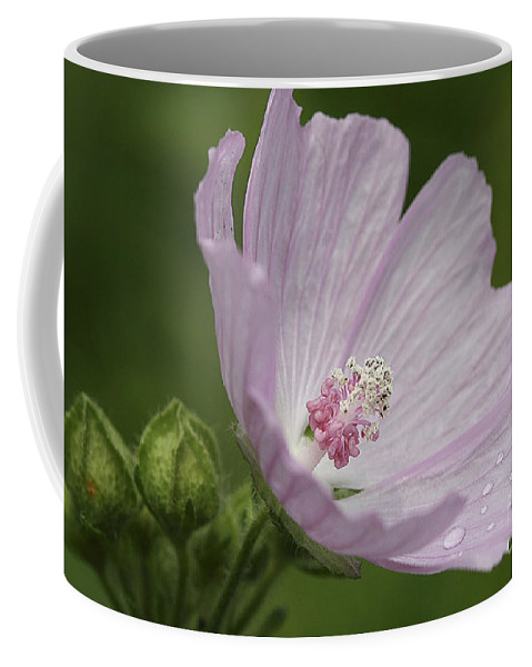 Flower Coffee Mug featuring the photograph Drops Of Dew by Deborah Benoit