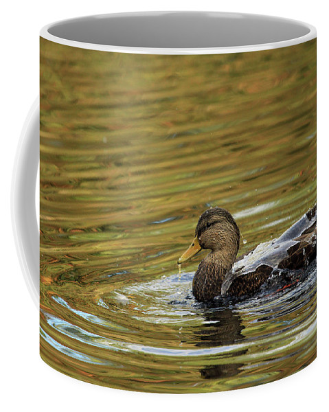 Duck Coffee Mug featuring the photograph Duck Dip by Karol Livote