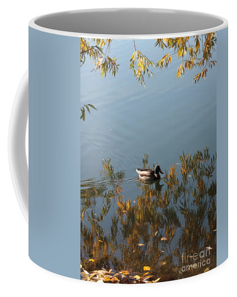 Autumn Coffee Mug featuring the photograph Duck On Golden Pond by Carol Groenen