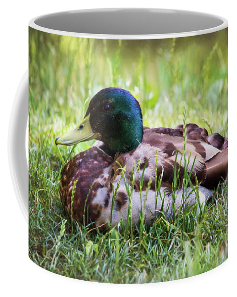 Duck Coffee Mug featuring the photograph Duck Portrait by Sharon McConnell
