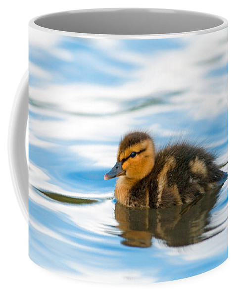 Mallard Duck Coffee Mug featuring the photograph Duckling by Randall Ingalls