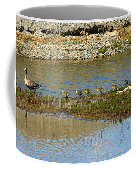 Ducks Coffee Mug featuring the photograph Ducks In A Row by Anthony Jones