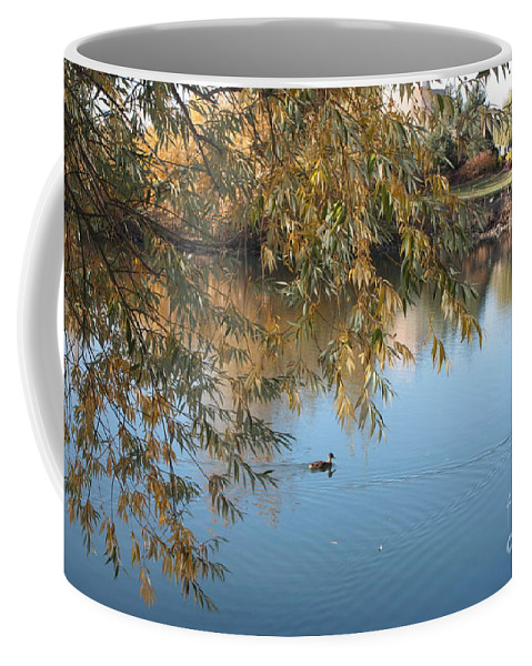 Autumn Pond Coffee Mug featuring the photograph Ducks On Peaceful Autumn Pond by Carol Groenen