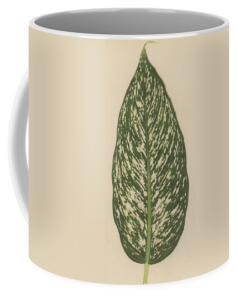 Leaf Coffee Mug featuring the painting Dumbcane by English School
