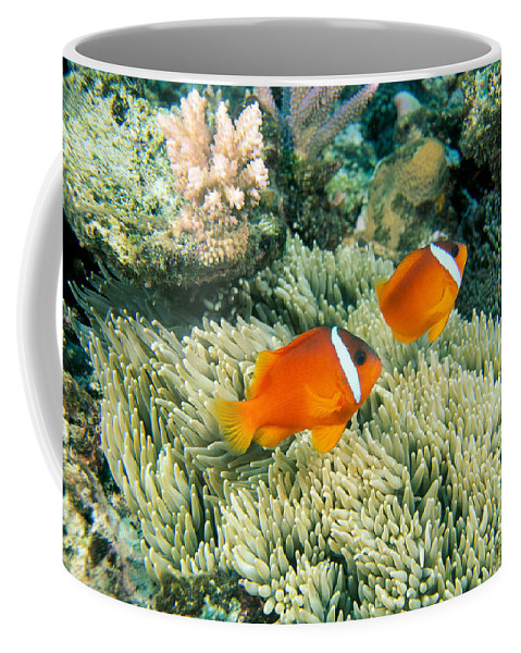 Amphiprion Coffee Mug featuring the photograph Dusky Clownfish by Dave Fleetham - Printscapes