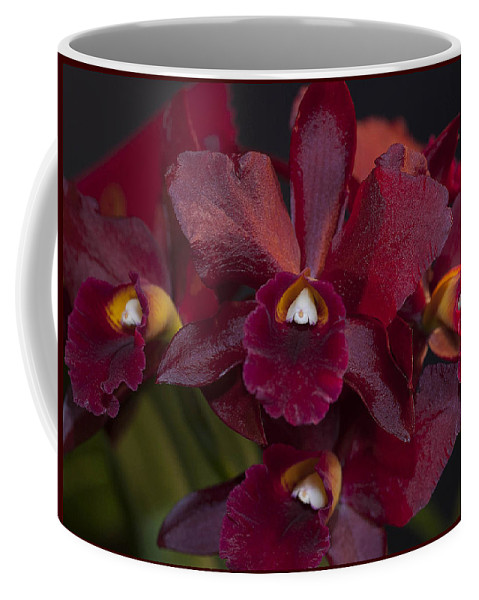 Orchid Coffee Mug featuring the photograph Dusty Red Orchid by Stephen Schwiesow