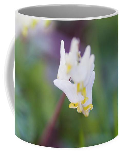 Beautiful Coffee Mug featuring the photograph Dutchman's Breeches 2 by Bob Corson