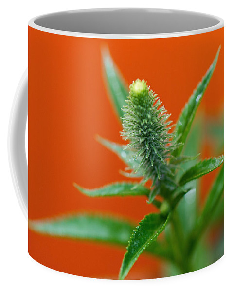 Orange Coffee Mug featuring the photograph Eager For Orange by Lisa Knechtel