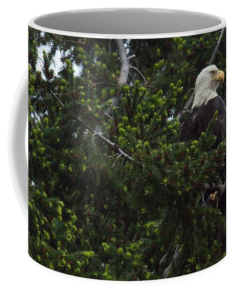 Bald Eagle Coffee Mug featuring the photograph Eagle Eye by Randy Hall