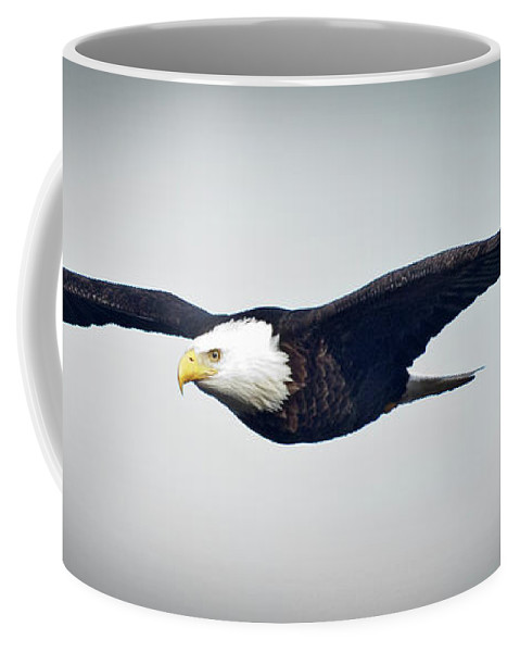 Bald Eagle Coffee Mug featuring the photograph Eagle In Flight by Rob Mclean