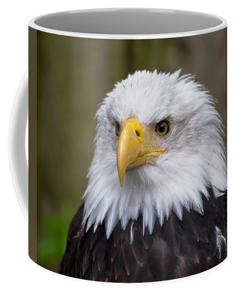 Eagle Coffee Mug featuring the photograph Eagle In Ketchikan Alaska by Michael Bessler