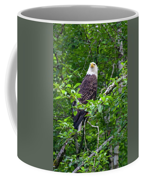 Eagle Coffee Mug featuring the photograph Eagle In Tree by Anthony Jones