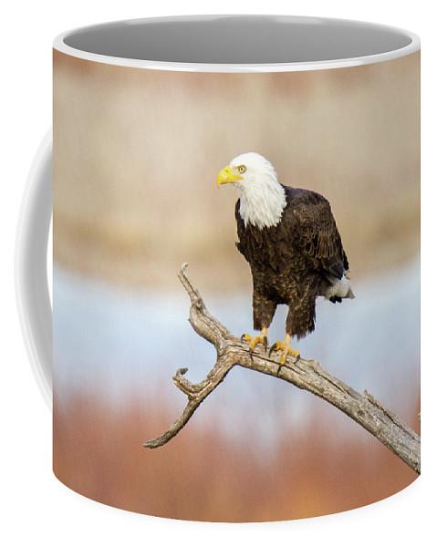 Colorado Coffee Mug featuring the photograph Eagle Overlooking Colorado River by Debbie Rudd